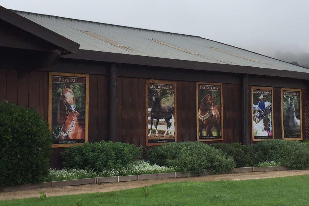 "SEPTEMBER 2017   We've been doing work for Varian Arabians for years but recently they started requesting large, vertical banners. As you can see in the image above, they frame these vinyl banners with wood on the exterior of the barn and they look fantastic! We also love seeing the large gold ""V""s on the building as well as the main sign as you drive in. Take a cruise through the beautiful hills of Arroyo Grande and you might spot this gorgeous property. Thank you to Angela and everyone over at Varian for letting us be a small part of your story."