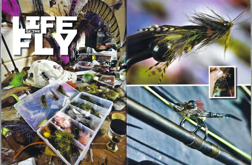 Life_of_fly-1002.jpg