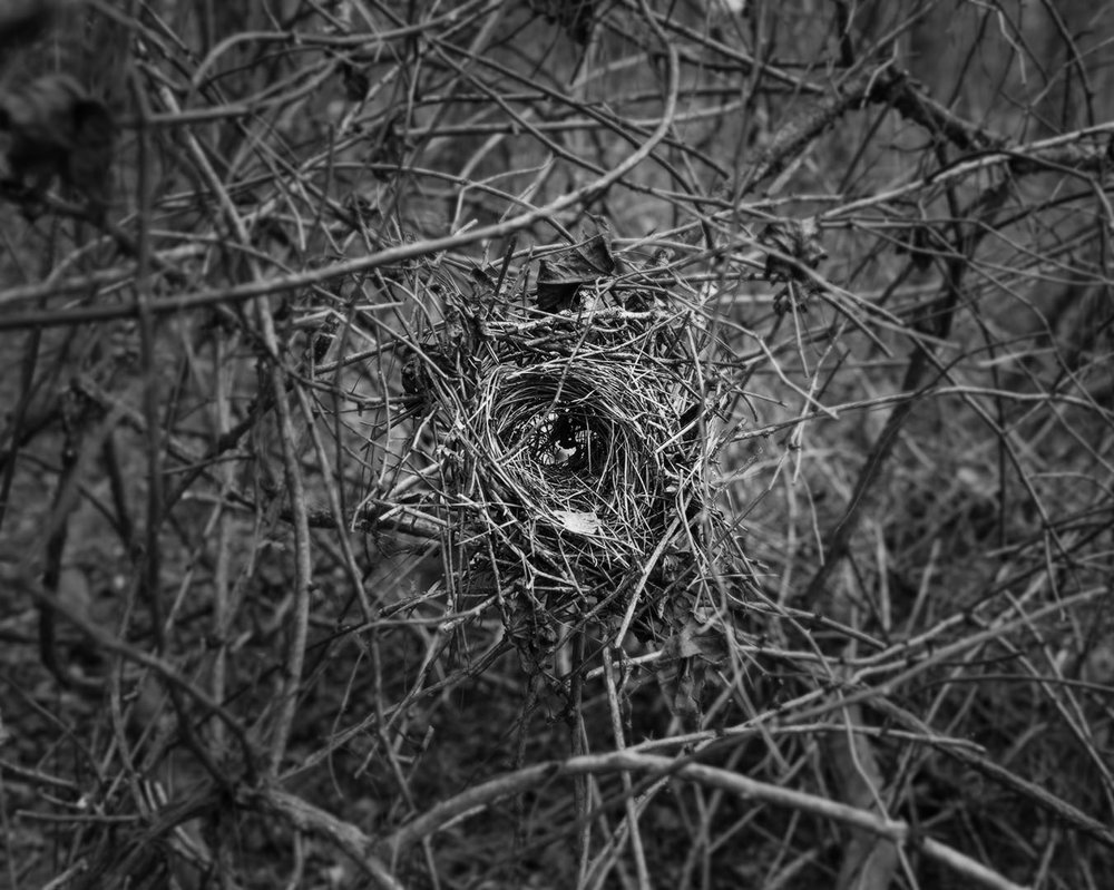 Woods_06.jpg