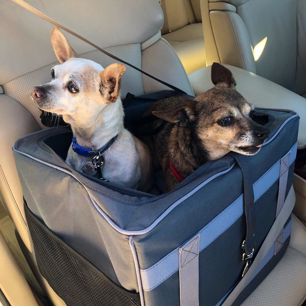 Gracie & Baby in the car on the way to their new home!