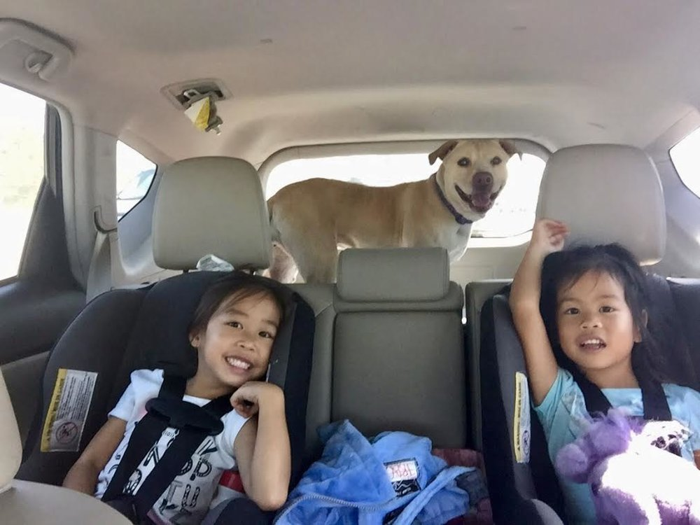 Sweet Fawn who was at DAWG for nearly a year on her freedom ride with her new family.