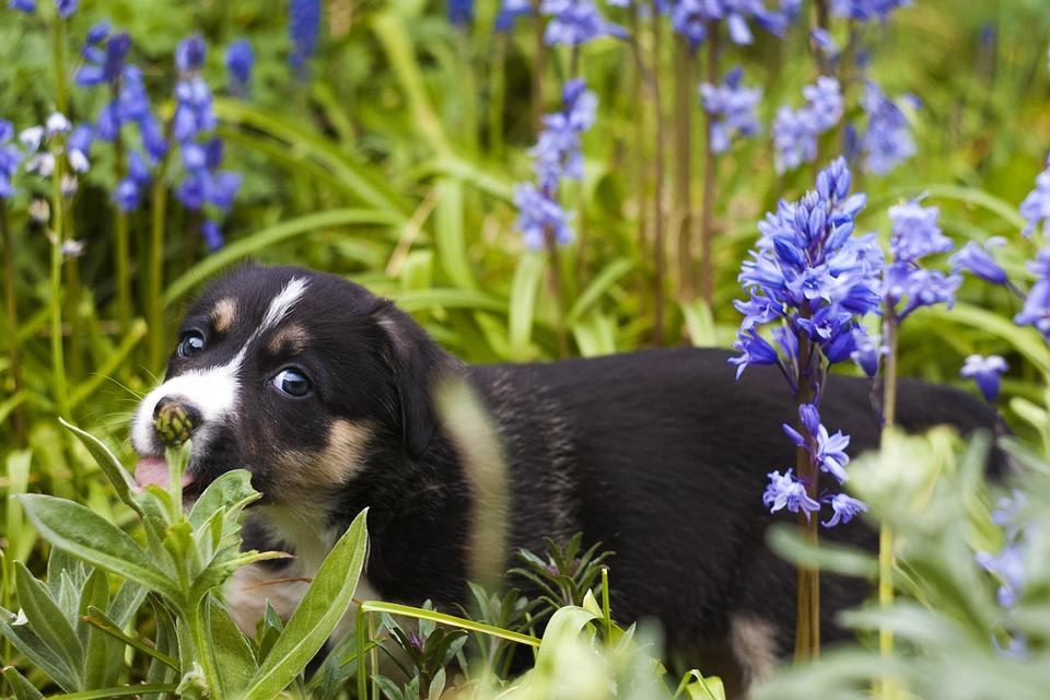 puppy-779293_960_720.jpg