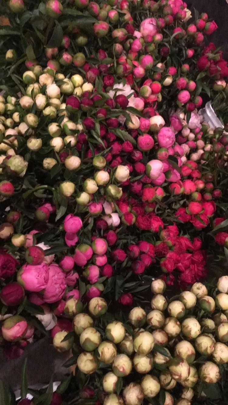 Cate's Flowers & Berries2.jpg