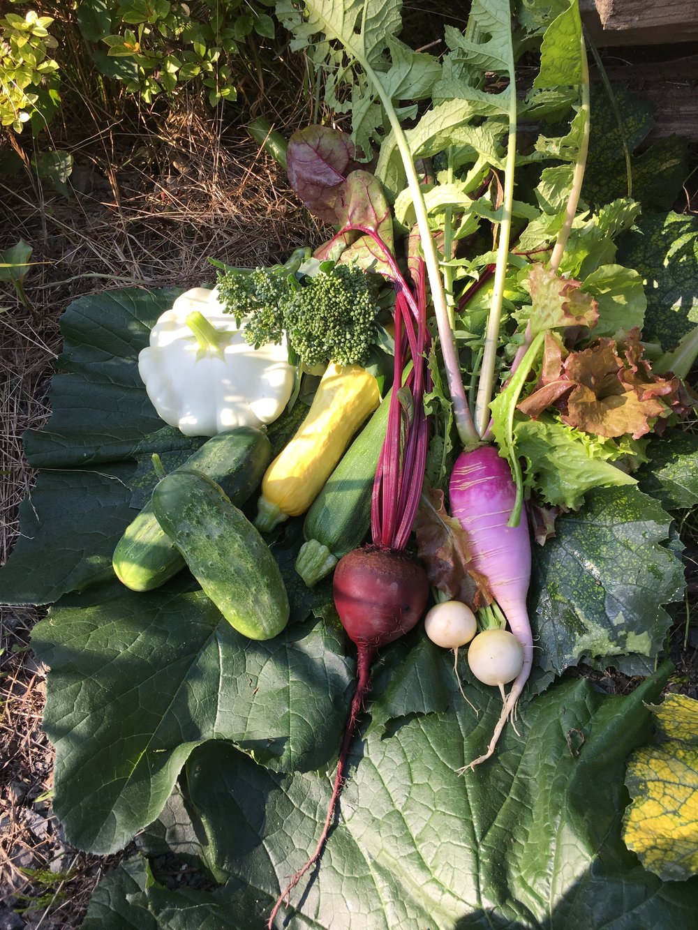 A photo from early July featuring some of our spring and summer vegetables. This image was captured by one of our great volunteers, Kya.
