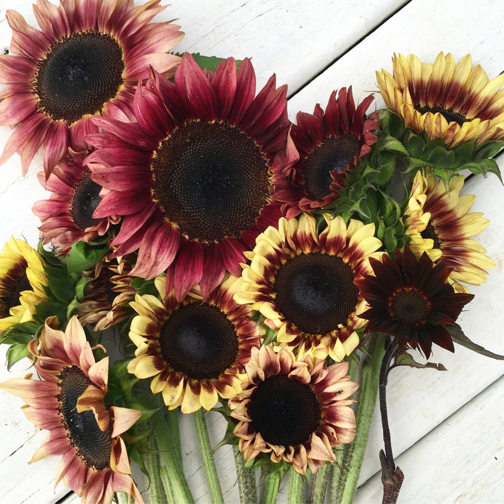 U-Pick Sunflowers -