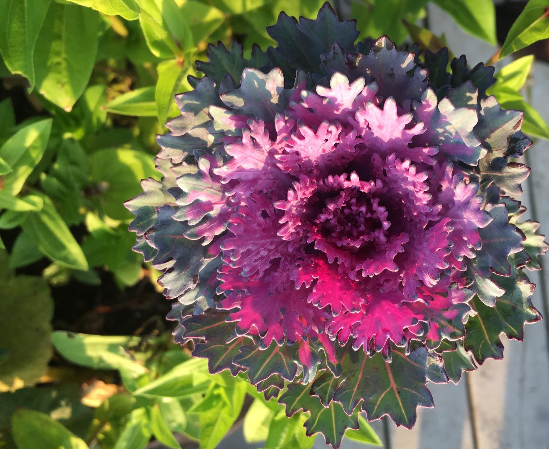Mad Lizzies Flower Farm