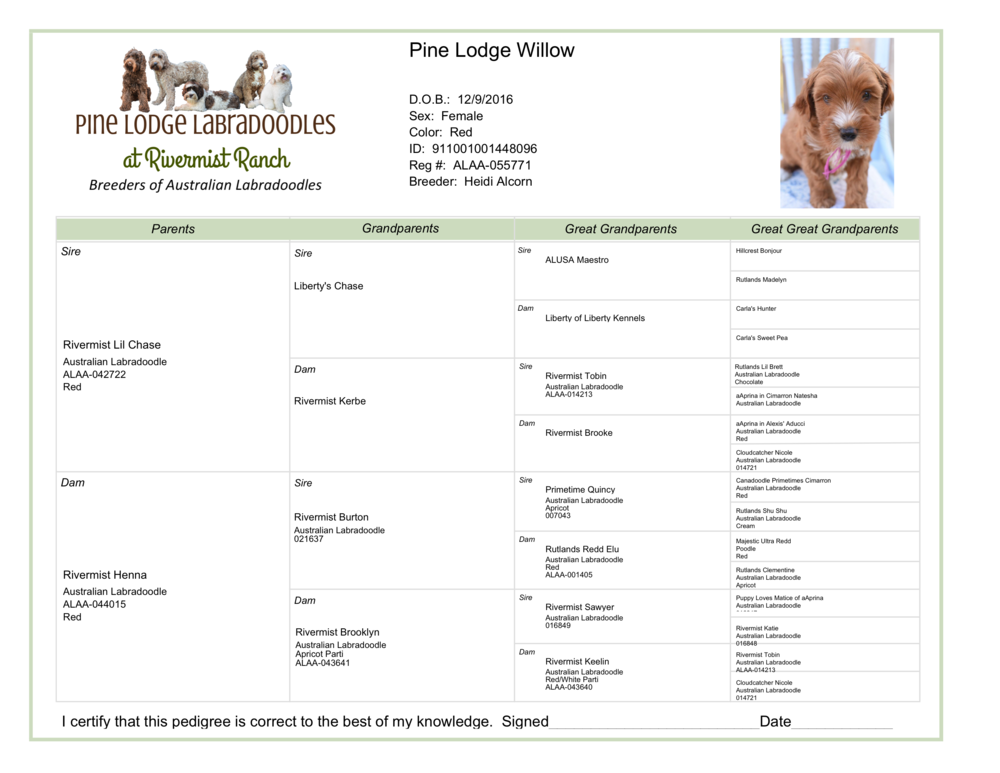 {Click to view pedigree}