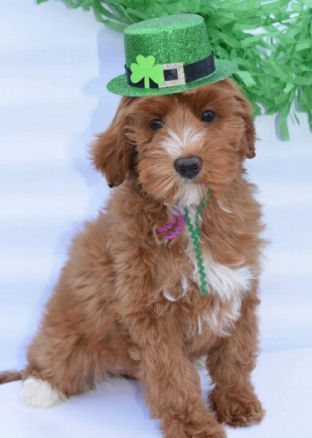 St Patrick's Day - Hazel (4).jpg