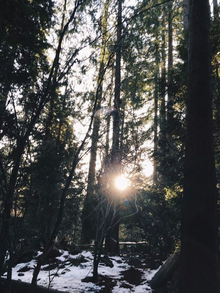 trees-capilano
