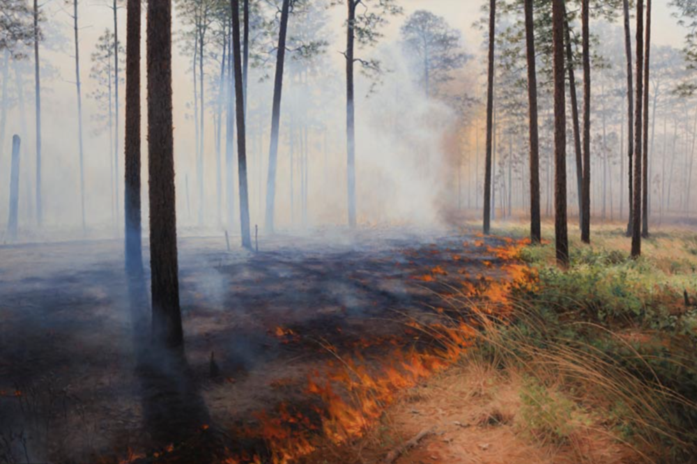 """Backing Fire Wade Tract, Arcadia Thomasville, Georgia  November 2013 Oil on canvas 48"""" x 72"""""""