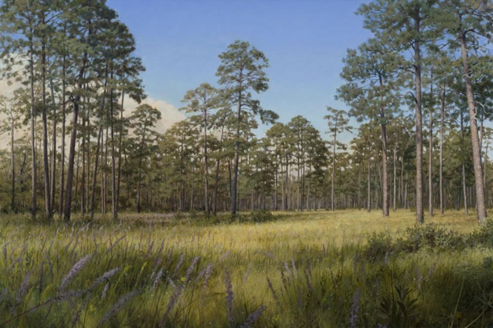 Longleaf Glade Greenwood Plantation,  Thomasville, GA Oil on Canvas 40 x 60 November, 2008