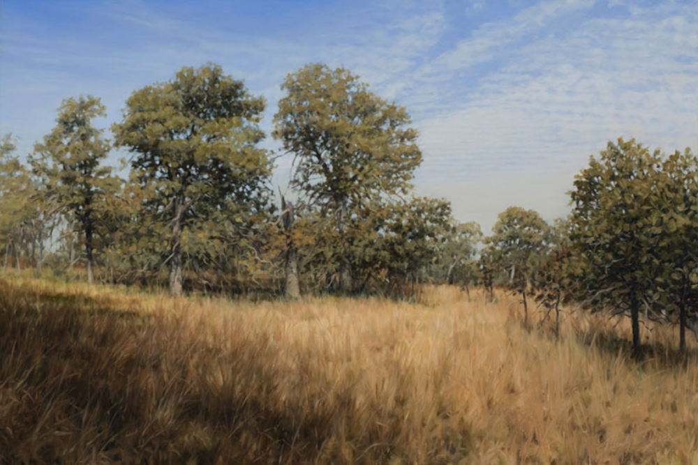 "Oak Savanna Sprewell Bluff Natural Area, Georgia March, 2009 Oil on canvas  24"" x 36"""