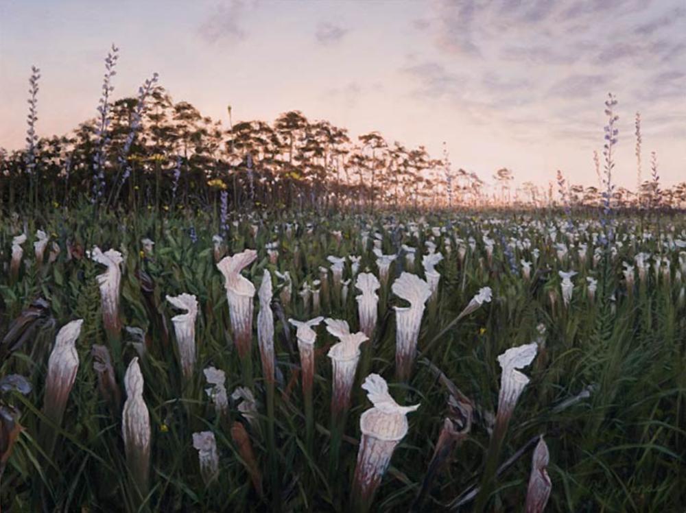 "White-Topped Pitcher Plants Splinter Hill Bog Preserve, Alabama October, 2009 Oil on canvas 18"" x 24"""