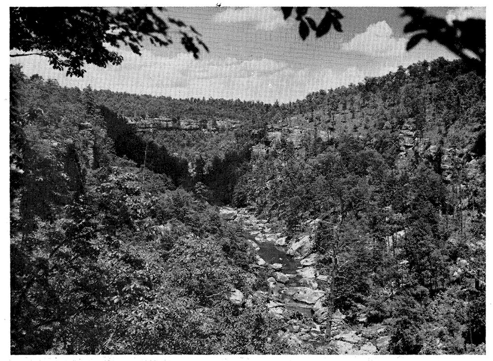 Old picture of Daddy's Creek Gorge, Morgan Co., TN (Catoosa Wildlife Management Area) in the 1950s. Riverscour grasslands occur in the depths of the gorge along the boulder-strewn riverbanks. Note the presence of open pine-oak savanna on top of the cliff at right.