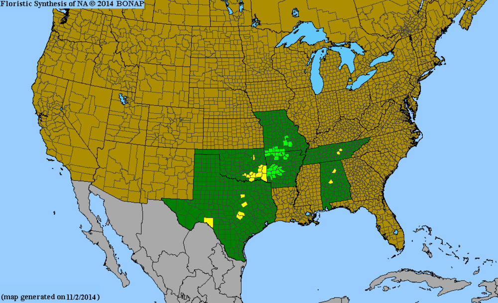 Map showing the distribution of Maidenbush (Phyllanthopsis phyllanthoides). Source: http://bonap.net/MapGallery/County/Phyllanthopsis%20phyllanthoides.png.