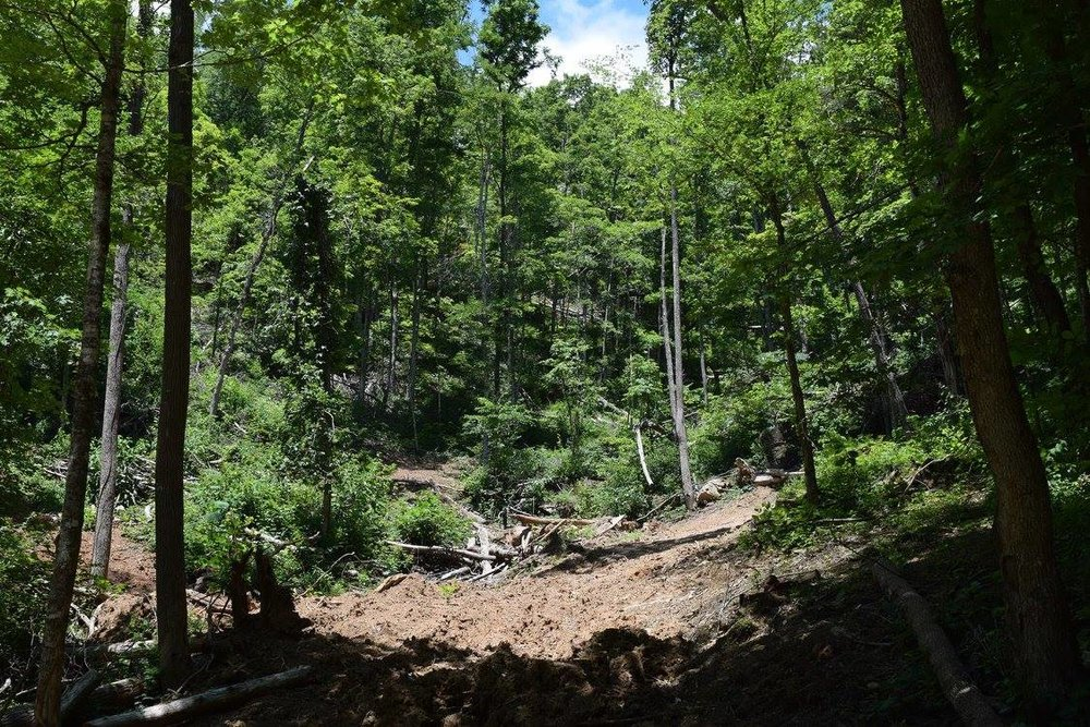 This open gap in the forest was once home to a thriving seep but has been destroyed by bulldozing. The small size of these Southern Ridge and Valley Dolomite Seeps makes them susceptible to these activities and because they are so tiny it doesn't take much to wipe them out. Credit: Ed E. Schilling.