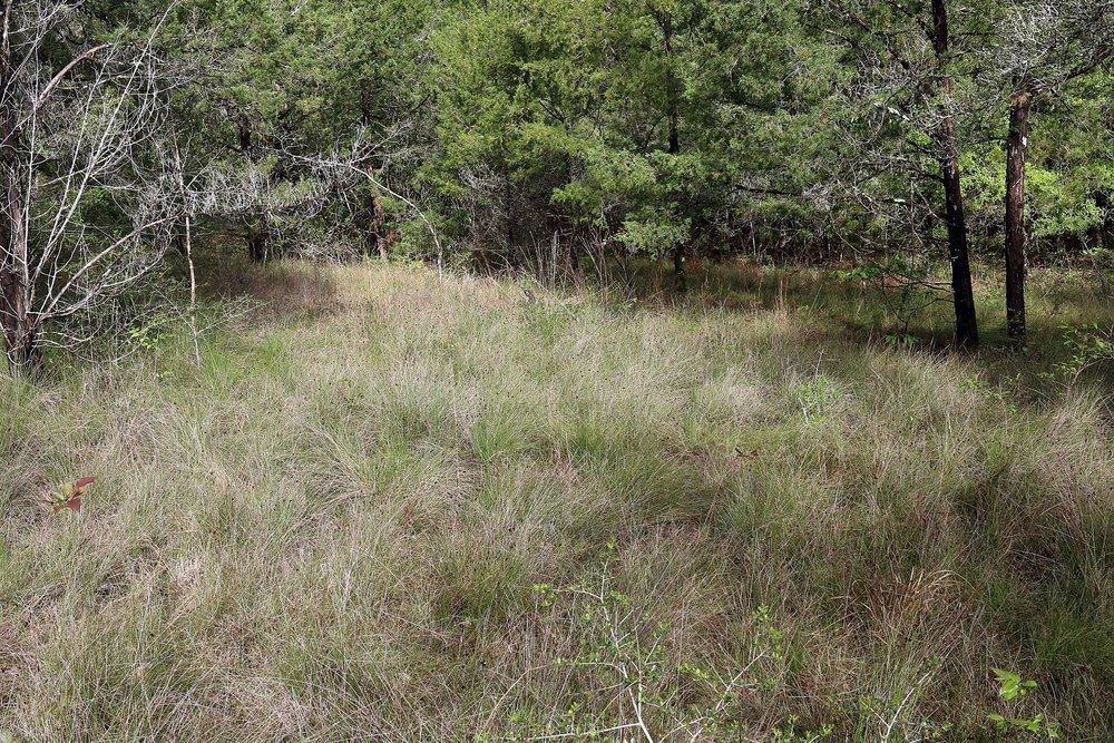 East Gulf Coastal Plain Limestone Barren, Jackson County, FL.