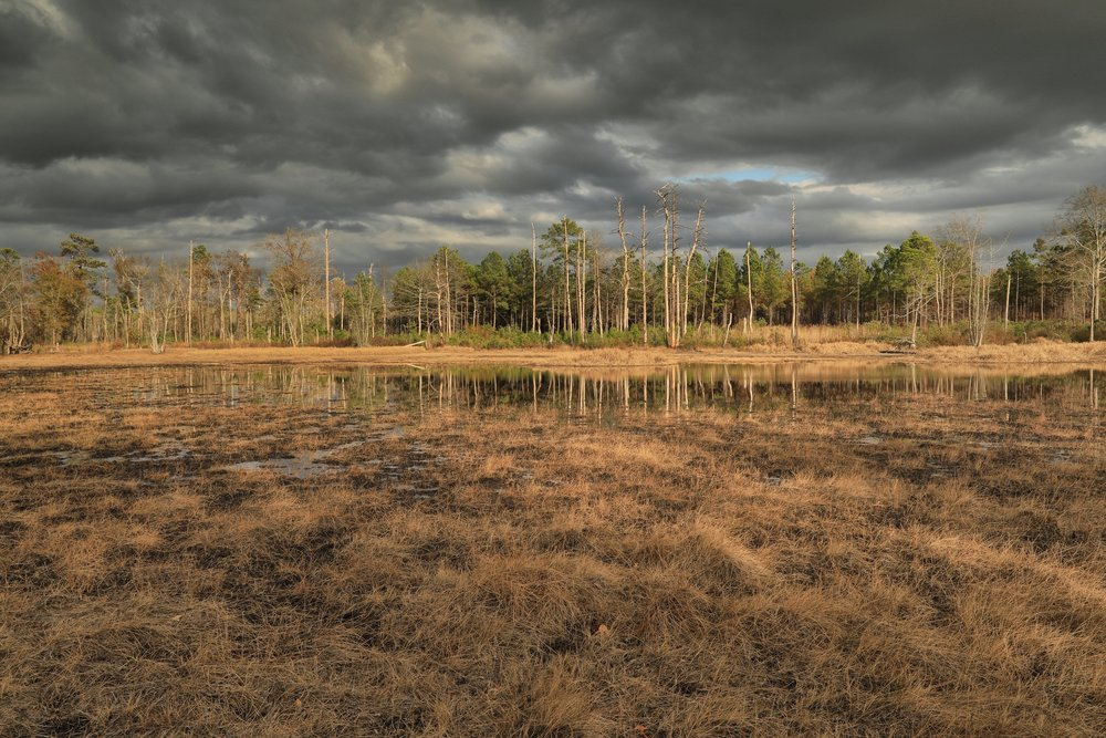 East Gulf Coastal Plain Ephemeral Depression Pond Marsh, Sandhills Region, Taylor County, Georgia