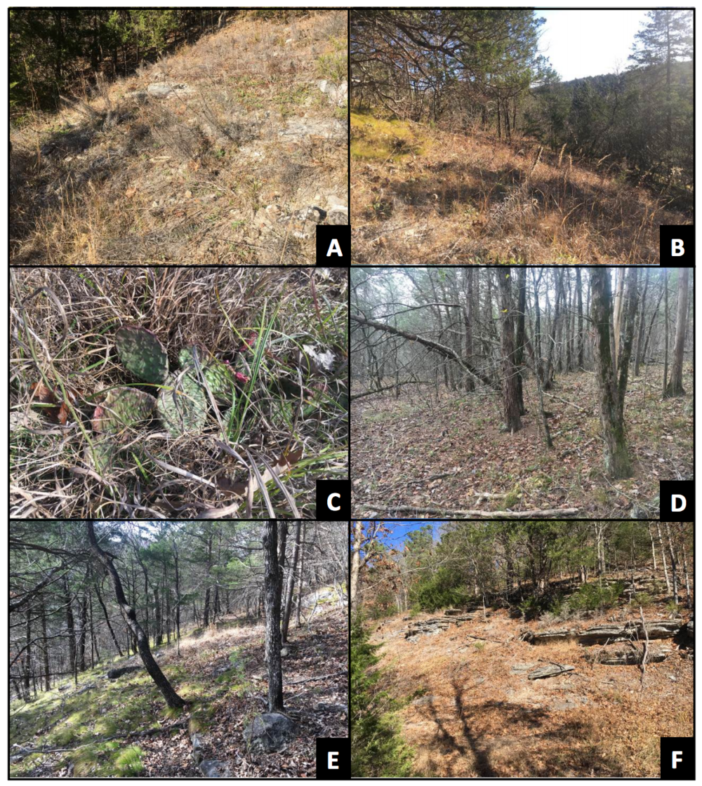 Photograph & Collect Baseline Data on Existing Ecological Communities -
