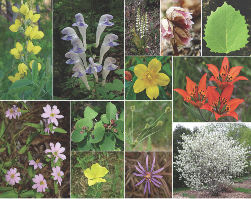 Conduct Species Inventory in All Habitats to Build Comprehensive Plant List -