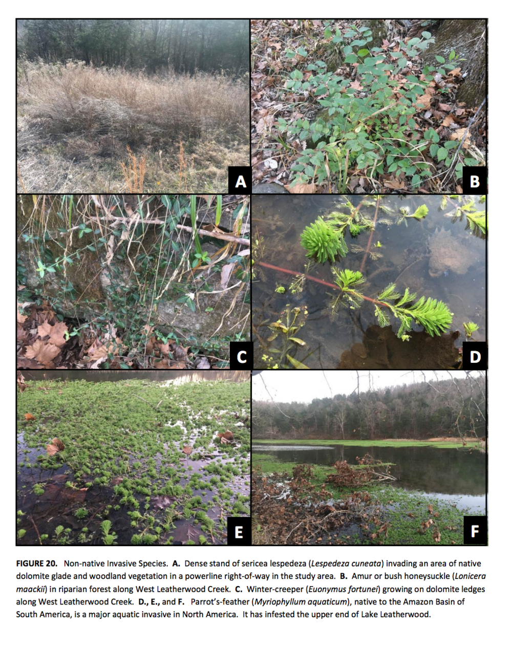 Prepare a Strategy for the Control & Eradication of Invasive Species -
