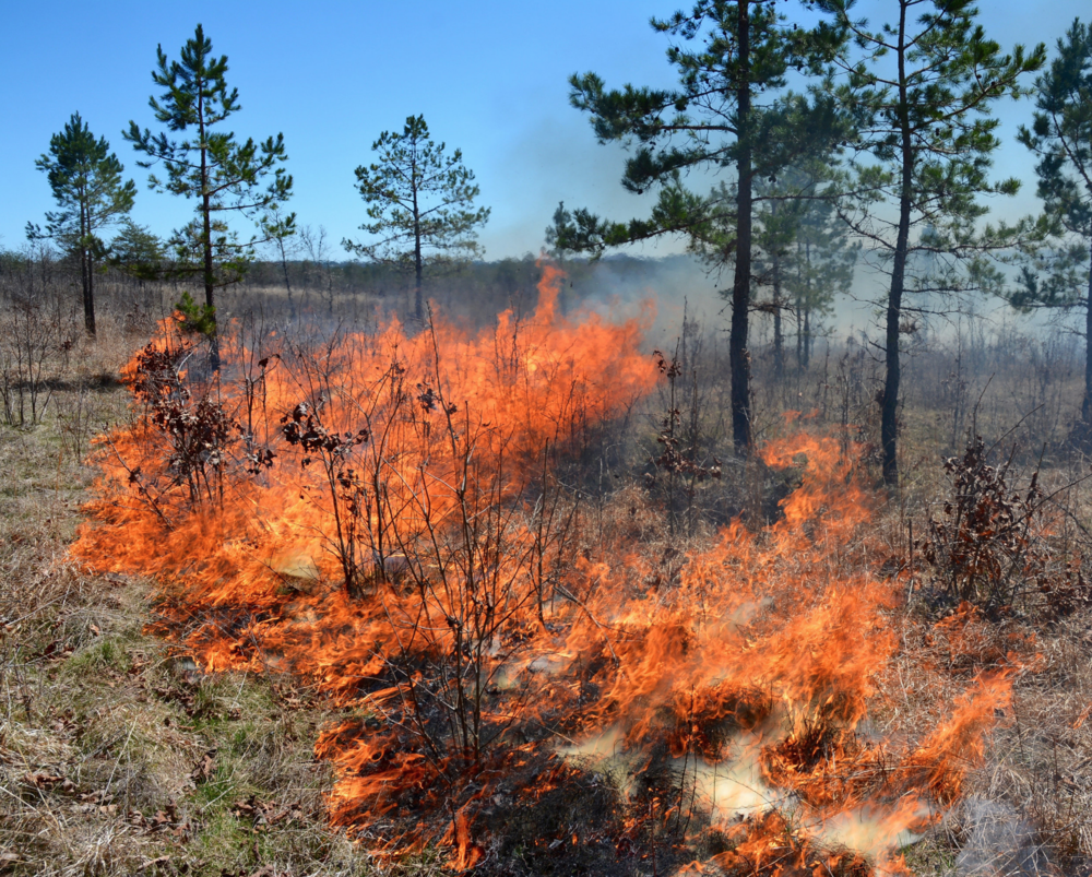 Develop an Ecologically-Based Burn Plan -