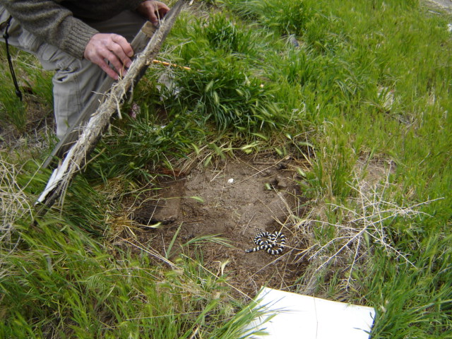 Set-up Long-Term Monitoring of Reptiles & Amphibians to Assess Restoration Progress -