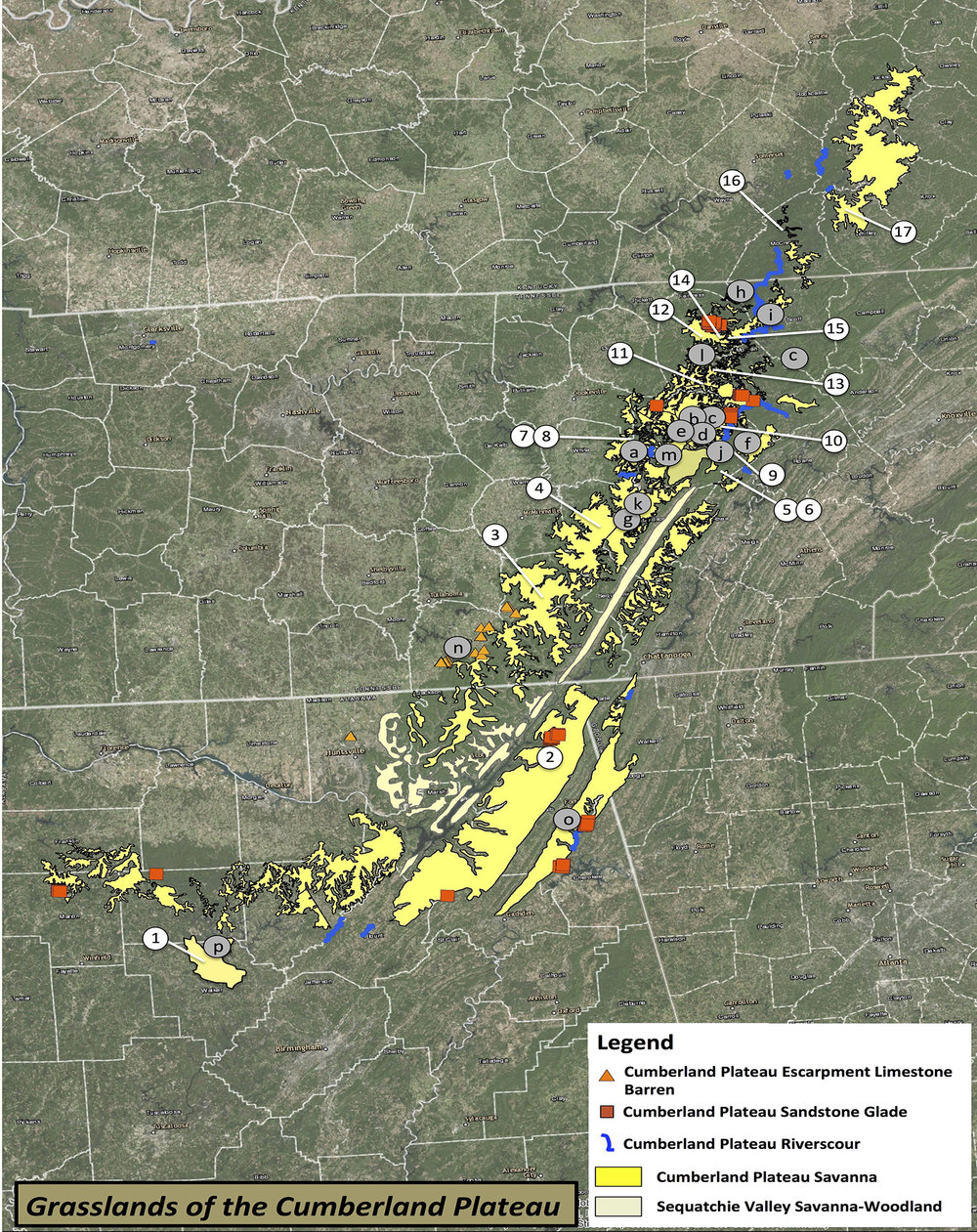 The historical Cumberland Plateau Savanna ecosystem once extended from se. KY to nw. AL along the surface of the Plateau. It covered hundreds of thousands of acres and was dominated by shortleaf pine-post oak-little bluestem with wet swales, meadows, and rocky sandstone glades embedded throughout. Today, 95-99% of this ecosystem has disappeared, primarily due to fire suppression, end of open range for cattle grazing, and conversion of wet grasslands to farm ponds.