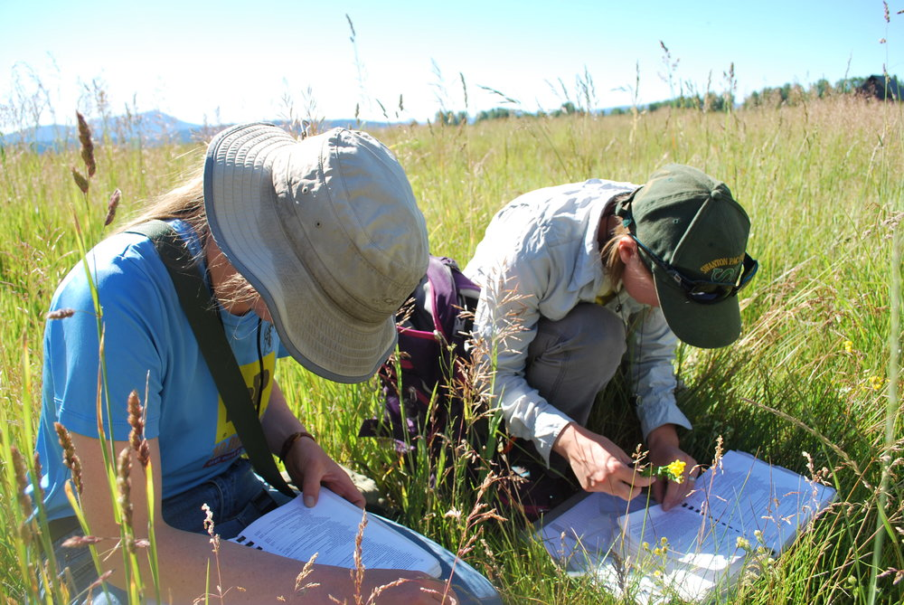 Back at base camp, staff and volunteers will work together to identify all plants