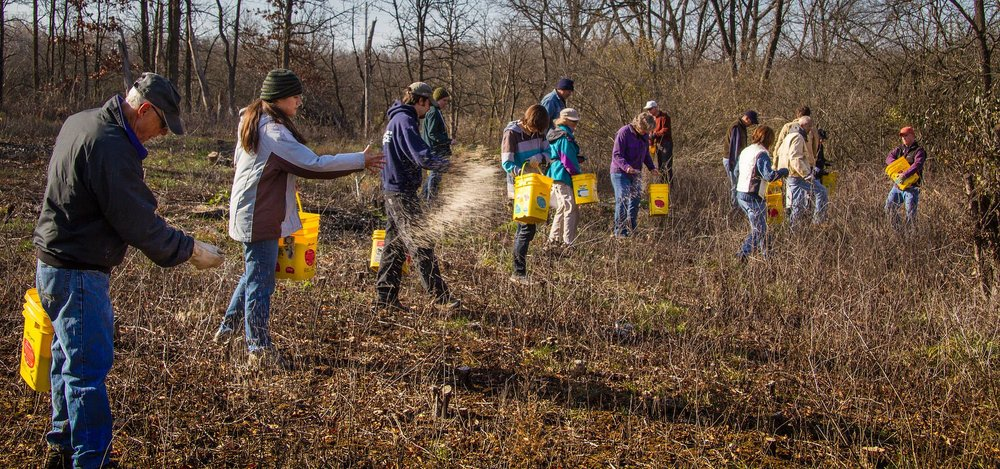 CFC volunteers spread seed harvested from local Chicago-area prairie remnants and from propagation beds at their headquarters. Seeds are often spready by hand with the help of teams of committed volunteers. This usually happens in late fall prior to oncoming winter snows.