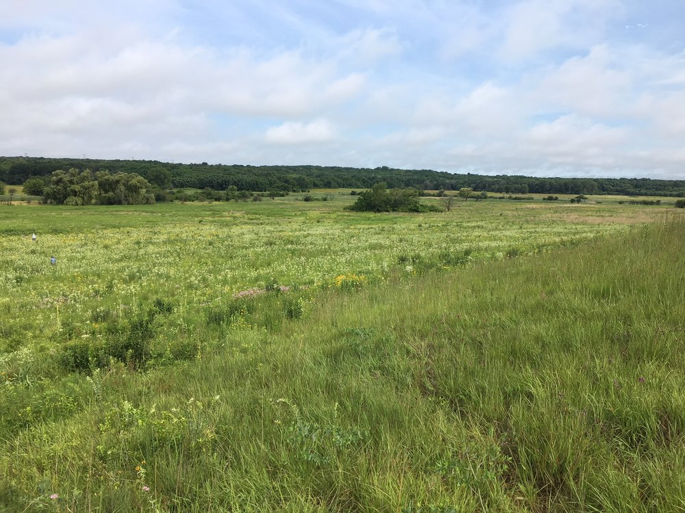 Lesson 2. Bringing Chicago-style conservation to the southeastern U.S. - There's more to grassland restoration than