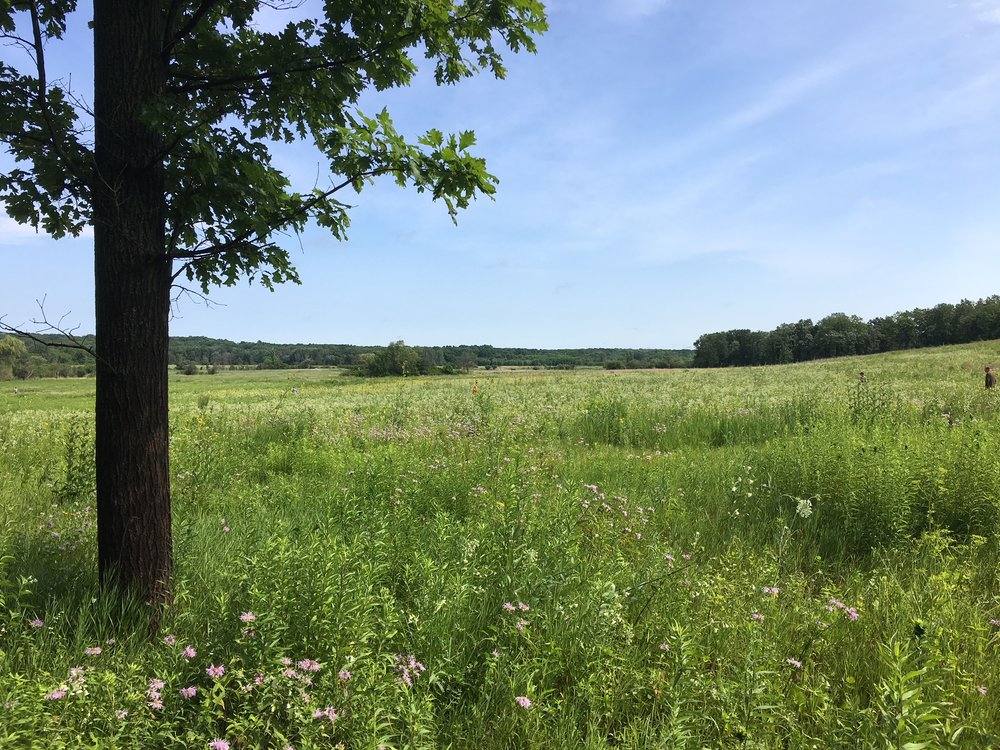 The bottomland shown here that is now Spring Creek Prairie was a dense forest 40 years ago. Citizens for Conservation volunteers have worked tirelessly to bring back the prairie that existed here  before  the forest.