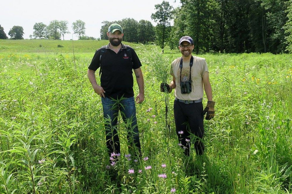Dwayne Estes, Executive Director of the Southeastern Grasslands Initiative (left), stands beside Justin Pepper, Chief Conservation Officer of the Bobolink Foundation, during a visit to Spring Creek Prairie in the Chicago suburbs to pull invasive White Sweet Clover with volunteers from the Citizens for Conservation organization. Where they are standing was forest just a couple of decades ago.