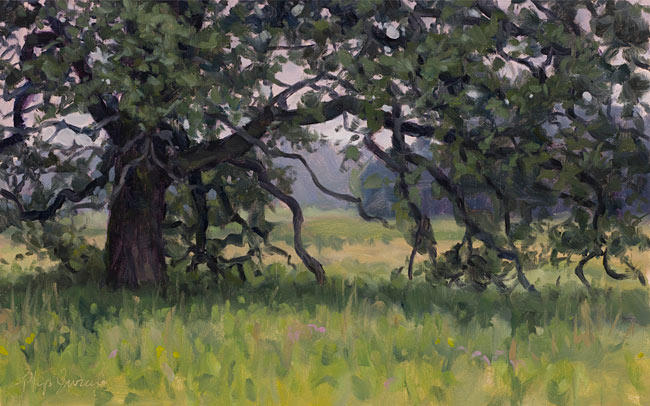 Bur Oak, Flint Creek Savanna, Lake County, Illinois, July 11, 2017, Oil on canvas, 10 x 16 in, by Philip Juras.    Some of the trees near Stephen Packard's neighborhood were old-growth bur oaks. The spreading growth form of these ancient trees comes from the fact that they have grown for 2-3 centuries among open, fire-maintained savannas where they can spread their branches.
