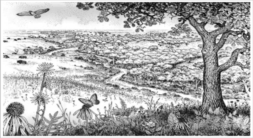 Illustration of tallgrass prairie by Paul Nelson.