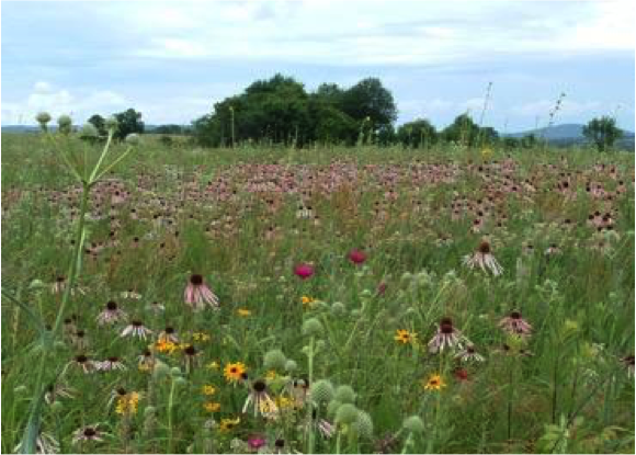 rich grasslands.png