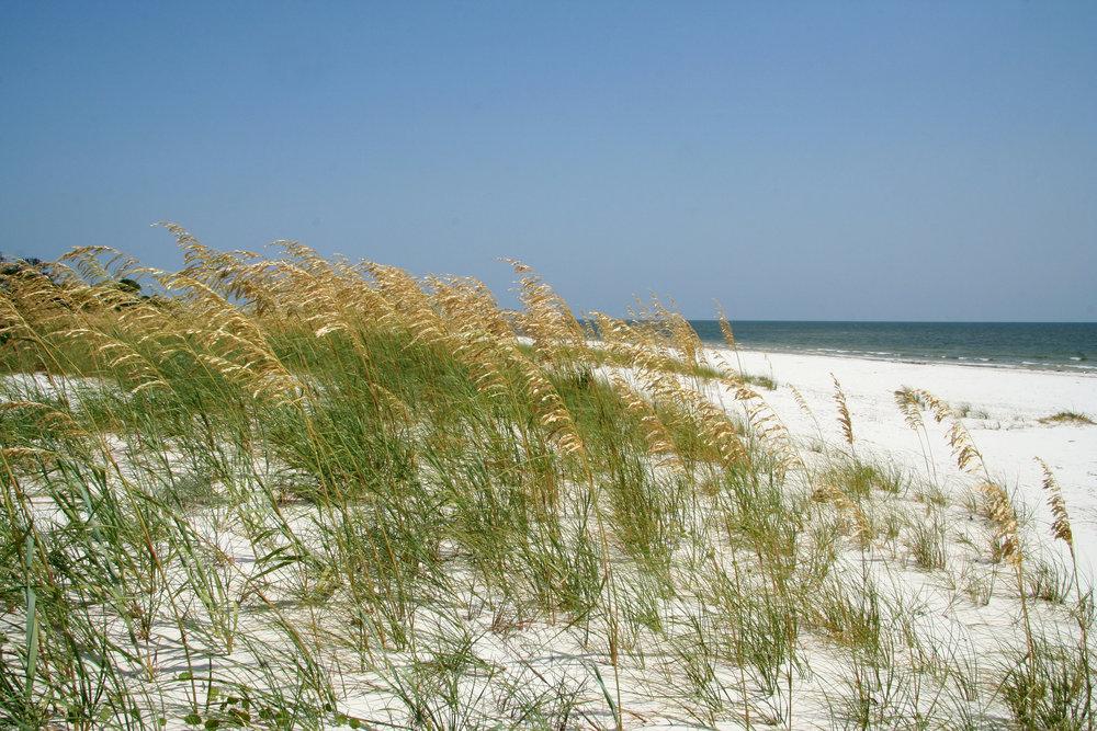 beach+grassland.jpg