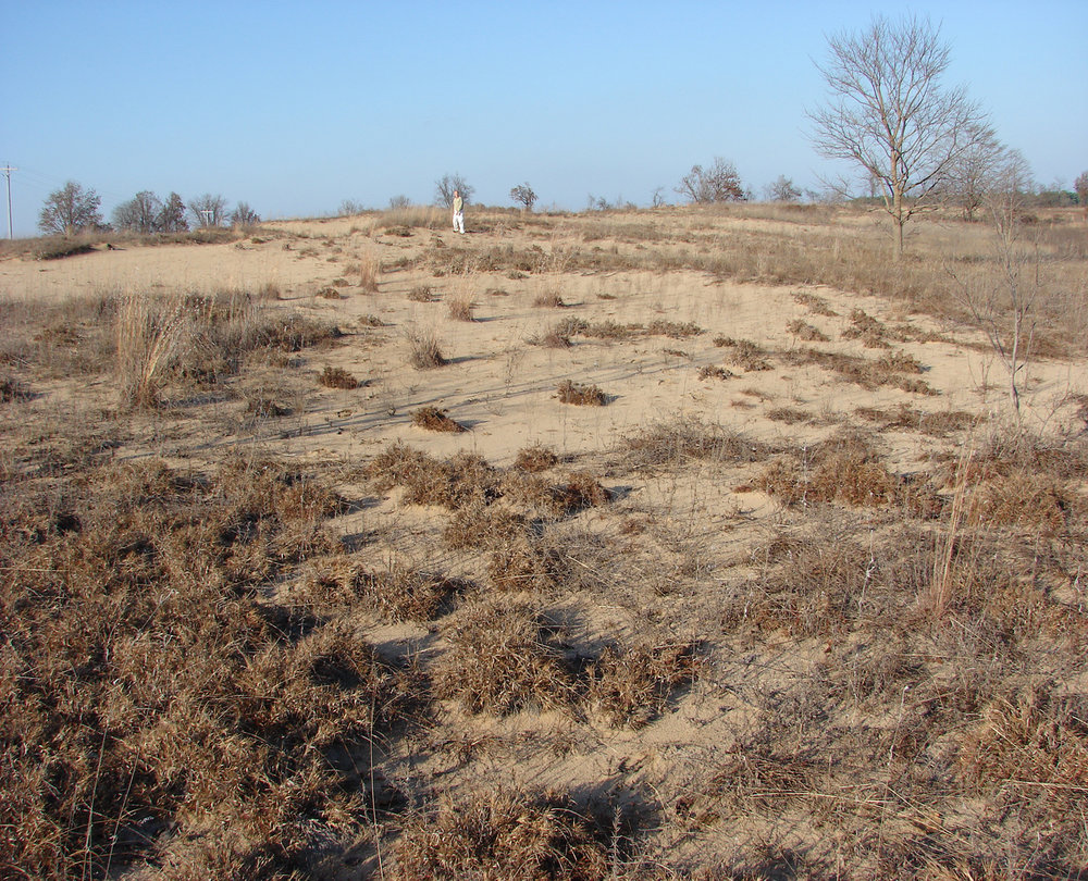 Deep Sand Grassland in Southeast Missouri