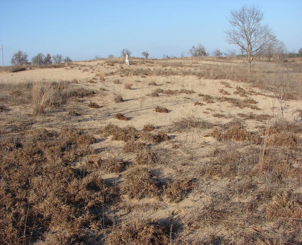 Deep Sand Grassland in Southeast Missouri