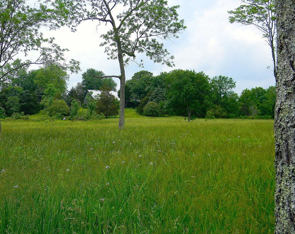 Wet meadows found along streams in valleys