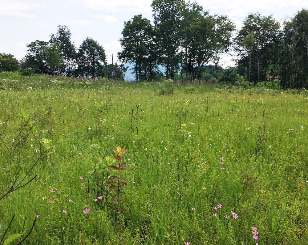 Wet seepage grassland on slope too wet to plow