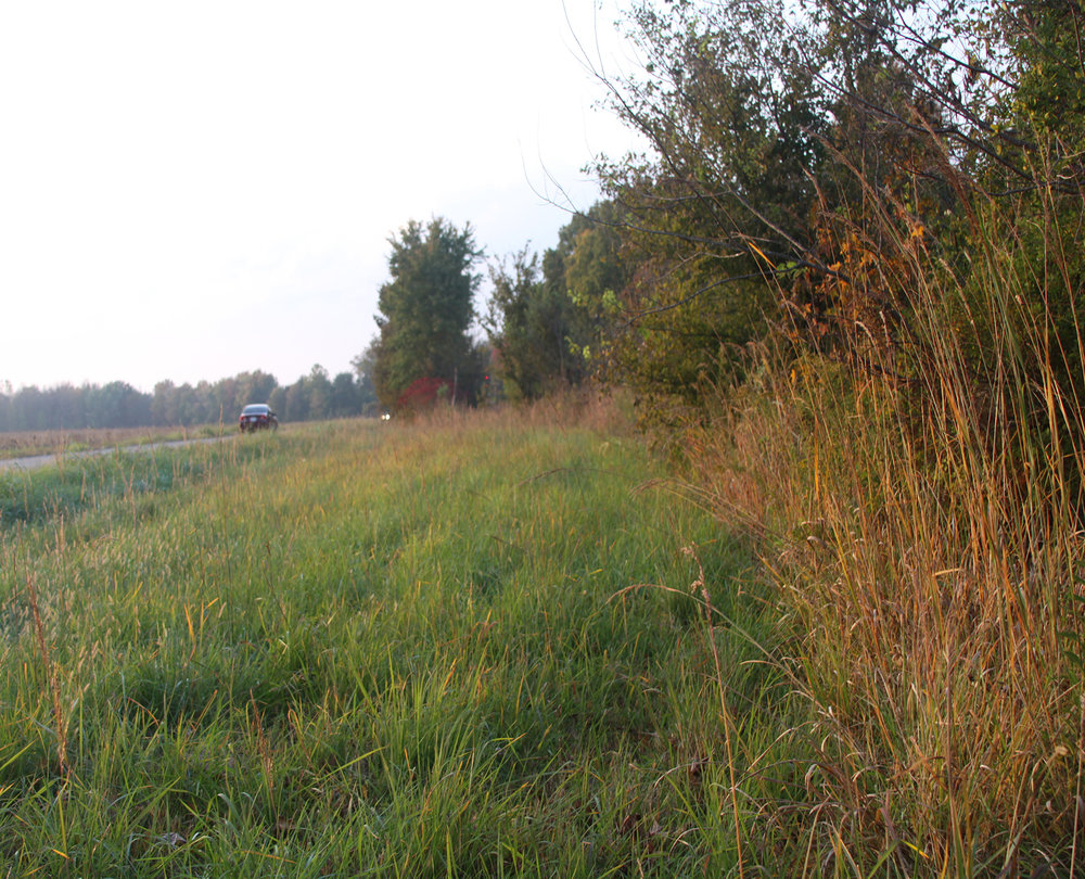 Look for prairie plants along fencerows, ditches, or banks
