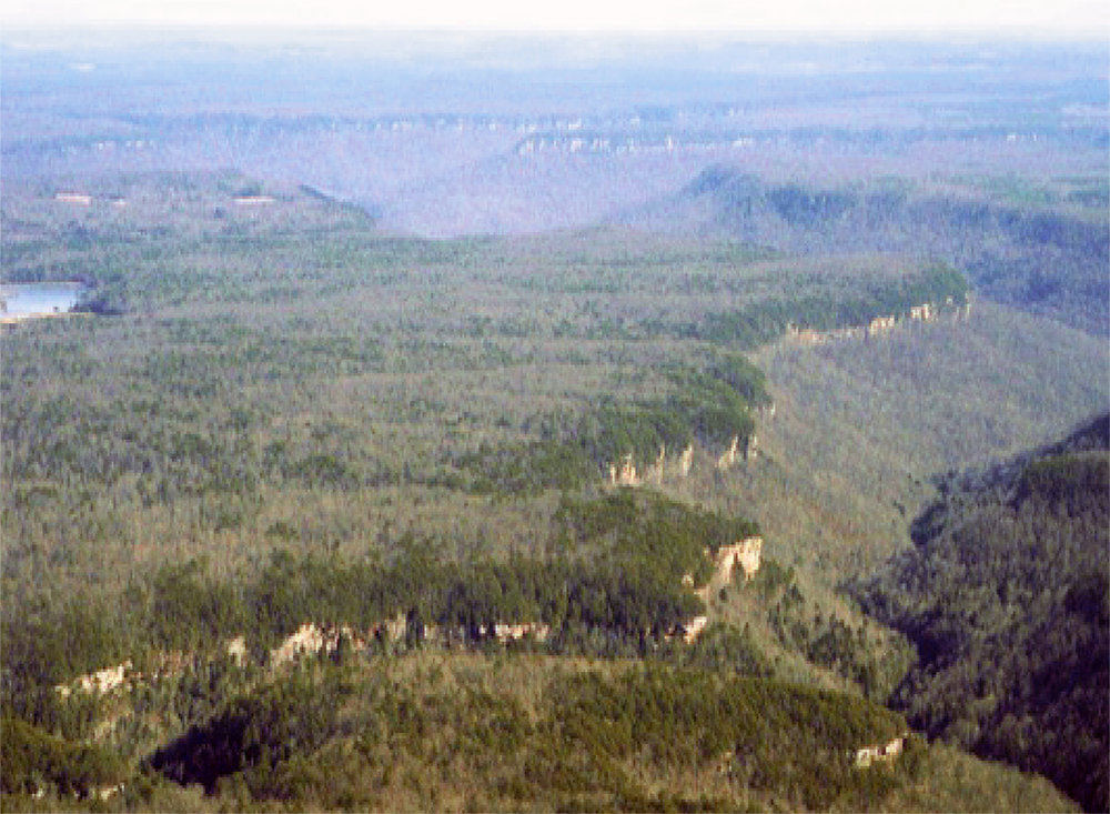 These vast, plateau-surface forests were open, grassy pine-oak savannas 200 years ago