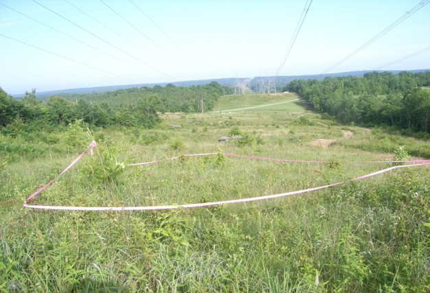 Savanna remnants occur in powerline corridors that bisect forests
