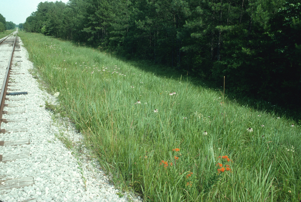 Savanna remnants occur in narrow strips along railroads
