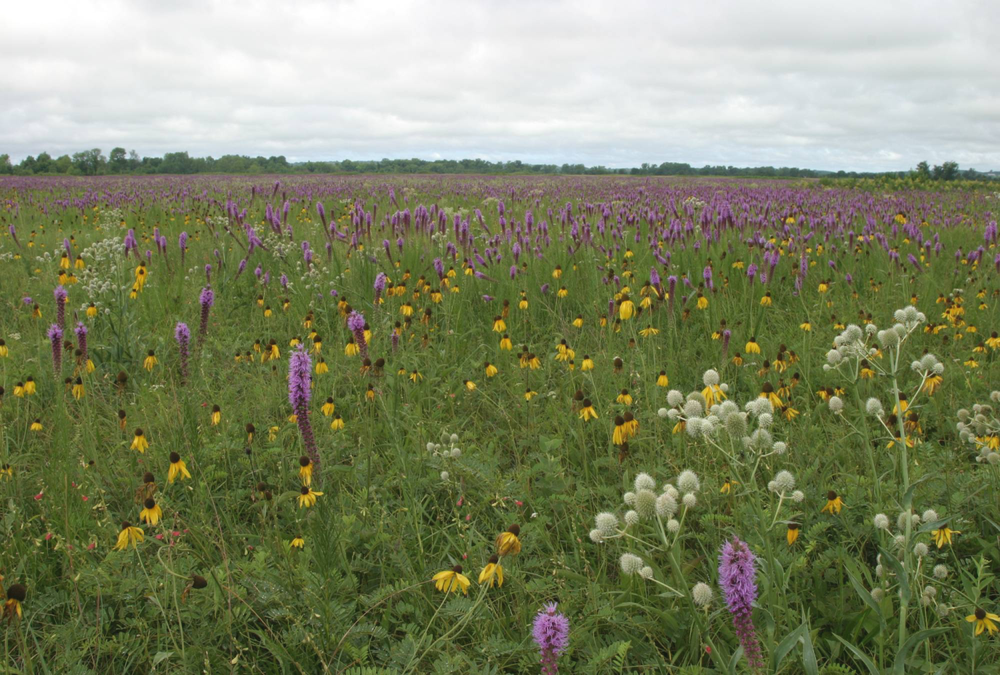 Well-managed unplowed prairies are very rare