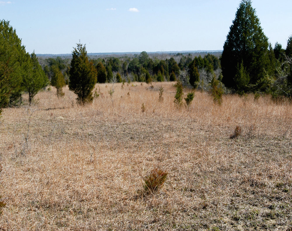 Degraded prairies may resemble old fields