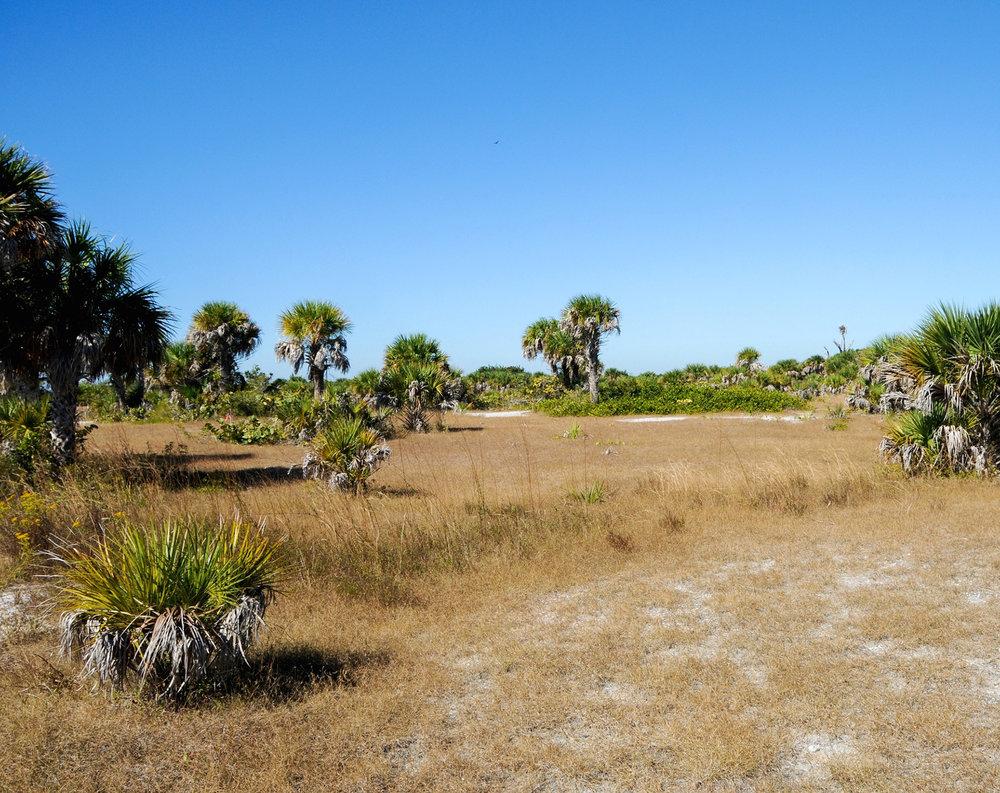 Palm Savanna