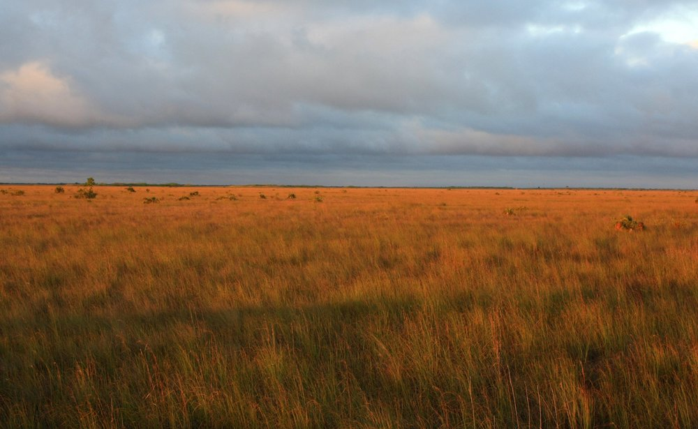 The largest prairie in eastern North America is in Florida