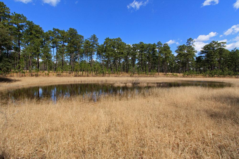 Grassland Ponds